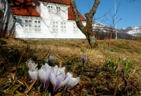 Krokusen blomstrar ved våningshuset frå 1828  på Brandsøy gård. Arkivfoto: Harald J Stavang.