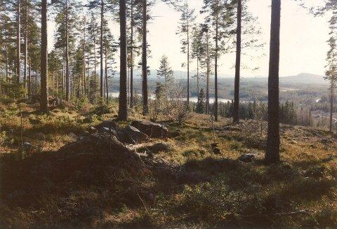 LINDBERGET: Slik så det ut i Lindberget i februar 1989. Året før, var det en meter med snø i samme området.
