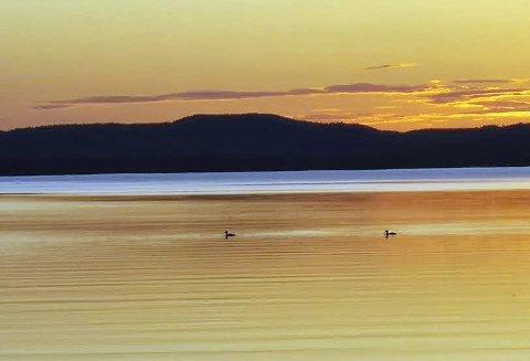 Sommeridyll ved Skasen: Bilde tatt av Ann-Kristin Holt.