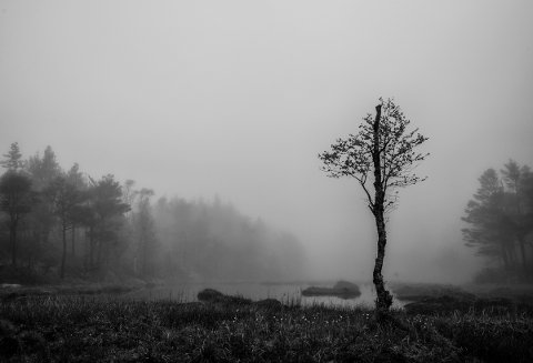 «Lake» av Ole Berntsen.