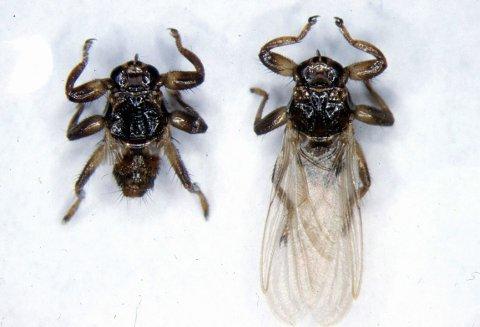 EKLE: –  jeg må innrømme at hvis hjortlusfluene plutselig dør ut i morgen, ville jeg ikke grått så veldig mye, sier zoolog Petter Bøckman. Foto: Mehl, Reidar / Folkehelsa / SCANPIX