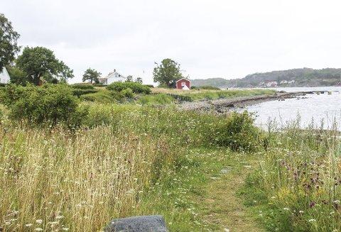 Stengsler i strandsonen er et stadig tilbakevendende tema i Færder kommune, også her på Hvasser.