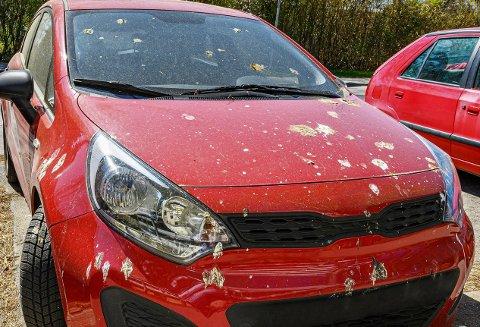 FULLTREFF: Røde biler skal være spesielt utsatt for massiv bombing av fugledritt.