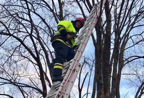REDDA: Even Stakkeland fekk den uheldige katten trygt ned frå treet.