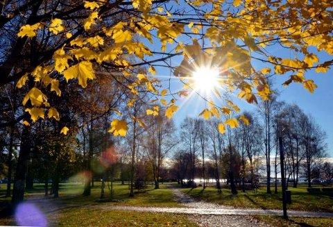 MED HØSTEN I FOKUS: Sol, lange skygger og skarpe farger gir gode bildemotiver.