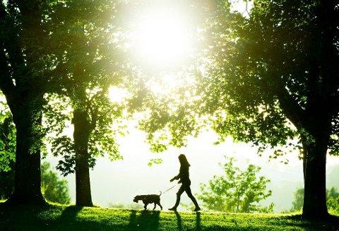 STRÅLENDE VÆR: Har du hjemmekontor er det gode muligheter for å jobbe utendørs i dagene som kommer. Foto: Scanpix