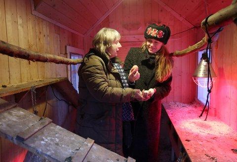 FERSKE: I Villa Walles hønsehus kan Marianne Loe (t.v.) og Marianne Bruusgaard hente ferske egg.