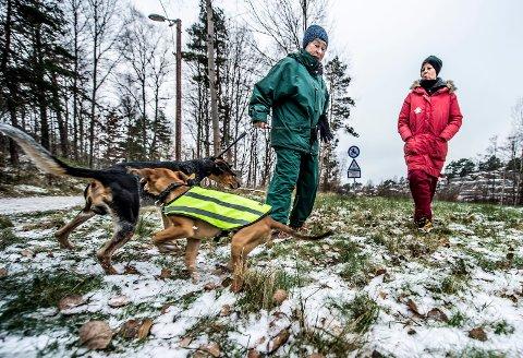 Om noen uker kan «Max» (tre måneder) og «Scott» løpe fritt rundt på denne plassen året rundt. Det gleder ikke minst eierne og naboene  Ingse Skjønhaug (til venstre) og Wibeke Andersen seg til.