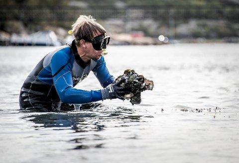 Dag Roal Wisløff er Oslofjordens Friluftsråds nye mann i kampen mot stillehavsøsters. Her plukker han opp kilovis på få minutter utenfor Fredrikstadholmen på Onsøy.