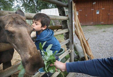 Bork Hilde-Eldby (8) kysser elgen Embla hos Svartisen Moose. Foto: Tom Melby