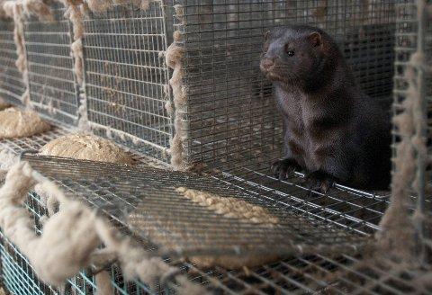 Dyrevernalliansen vil være Venstre evig takknemlig, skriver Live Kleveland.