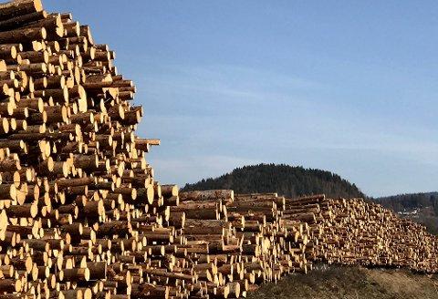 STØRRE OG STERKERE: Med tre milloner kubikkmeter tømmer i året, satser styrene i Mjøsen Skog og Glommen Skog på at en sammenslutningen med skal gi muskler i markedet