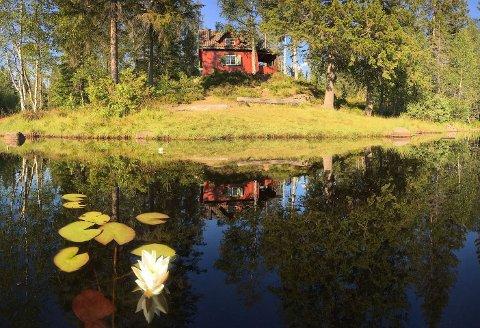 Skogsidyll: Hytta ligger idyllisk til rett ved Damvann på Øverskogen.