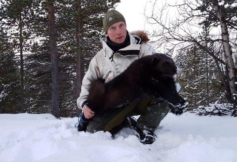 John Ivar Larsen med en av jervene han felte i Reisadalen forrige jaktsesong. Larsen menert bedre kompetanse hos jegerne og bruk av elektronisk utstyr har gjort jakta mer effektiv. Foto: Ola Solvang