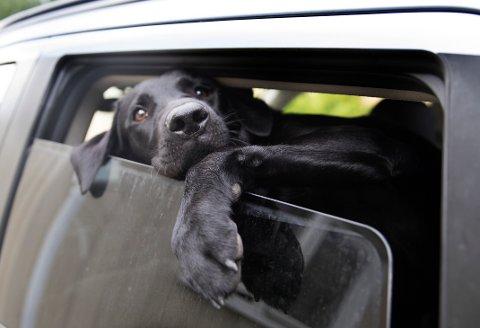 SYKDOM: Flere hunder er døde som følge av en ukjent sykdom. Foto: Jon Eeg / NTB scanpix