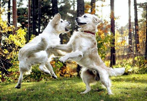 HUNDEPARK: Sandefjord Hundeklubb anslår at det er mellom 3.000 og 3.500 hunder i kommunen. I tillegg kommer hunder som tilhører hytteeiere og feriegjester. (Illustrasjonsfoto: Joakim S. Enger/ANB)