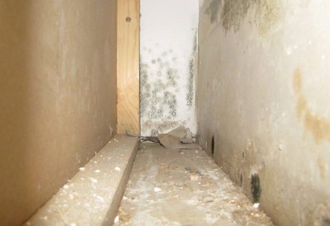 Muggsopp som vokser inne i vegger kan spre vond lukt til resten av boligen.