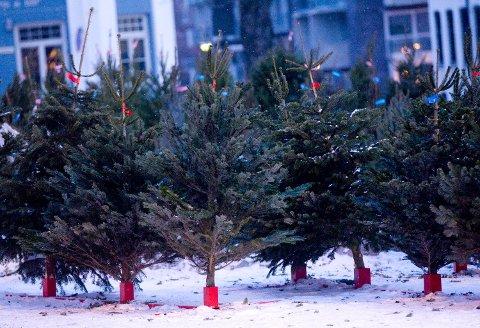 JULETRE: Det er høytid for salg av juletrær, men prisene varierer stort. Flesteparten i Norge velger edelgran til stua (bildet).  Foto: Morten Holm (NTB scanpix)