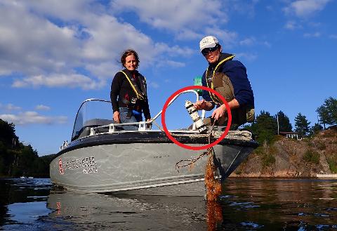 MANGLER TO: Da Havforskningsinstituttet nylig skulle hente inn data fra sine 26 lyttebøyer i Sandnesfjorden og Lagelva, ble to av dem ikke funnet. Her er forskerne Caroline Durif (t.v.)  og Mehis Rohtla.