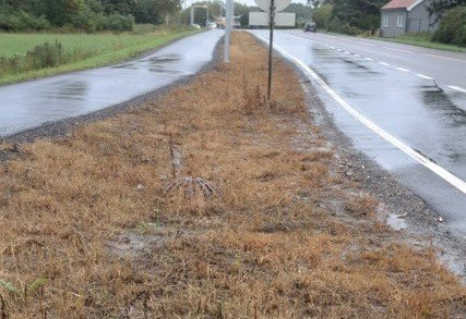 Sprøytet rabatt mellom gang/sykkelveien og kjørefeltet på Rv. 111.
