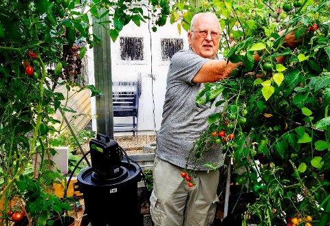 Per-Ivar Rasmussen i aksjon i sitt nyeste tilskudd av bygg, drivhuset. Tomatene ser lovende ut, og smaken er meget godt, viser det seg.