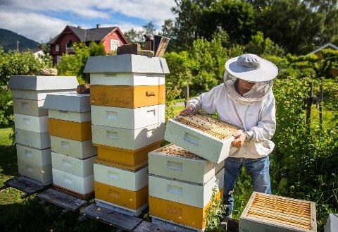 Hobbier: Olav Haugen fra Lillehammer har syv honningproduserende bikuber midt i hagen sin i Erik Moens veg 14.