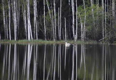 MILDERE MAI: Bildet er tatt 26. mai ved Jarenvatnet.