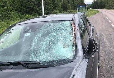 SAMMENSTØT: Mandag formiddag krasjet en bil med en elg på Kompveien.