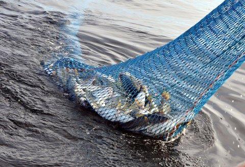 SNURREVAD: Nå får snurrevadfiskerne et eget felt på Henningsværstraumen.