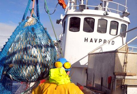 """GODT ÅR: 2020 ble et godt år for rederiet som driver snurrevadbåten """"Havpryd""""."""