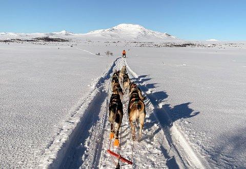 Thomas Wærner og hundespannet på viddene i Valdres med Storeskaget rett forut.