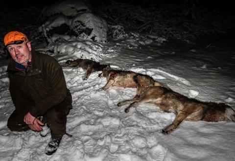 HAR GÅTT GREIT: Jaktleder Kristian Noer med de tre ulvene som ble ble skutt første jaktdagen. Det var blant annet alfa-paret i reviret.