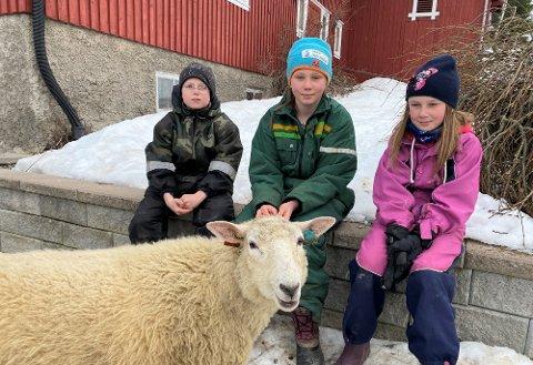 Anders, Marthe og Thea Henriksen sammen med kjæledyret Nusse (snart ett år).