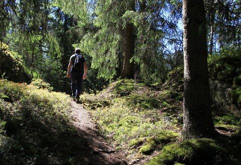 Vi må like skog når vi legger ut på en slik vandring.