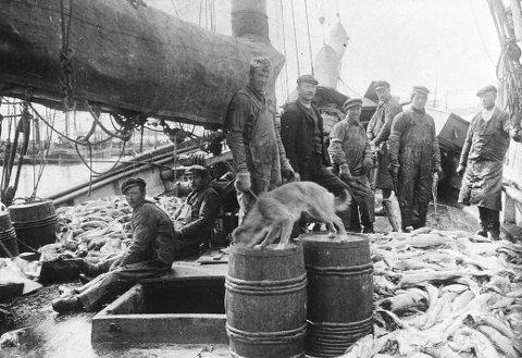 Historisk: Bøfjord-galeasen «Freya» tek inn fisk i Lofoten i 1910. Lasten blir kleppfisk på berga ved Kristiansund. (Frå museets fotosamling)