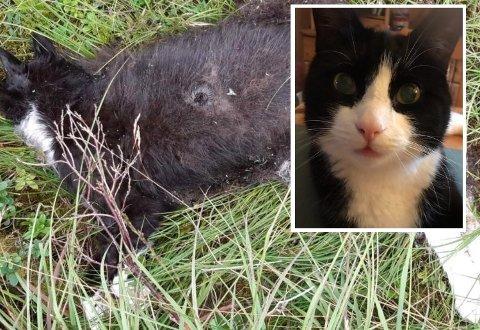 Eigaren meiner det er tydeleg at katten har blitt skoten.