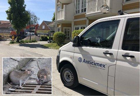 TILKALTE HJELP: Bilen fra skadedyrbekjemperen Anticimex har vært på plass ved Holmen eldresenter daglig denne uka. De skal sørge for å bli kvitt de uønskede gjestene: rotter.