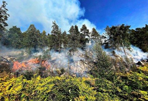 FAREVARSEL: Det er svært tørt i skogen nå, og brannvesenet er forberedt på å måtte rykke ut.