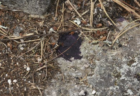 Kladder: Flere steder på hyttetomta falt det ned kladder med fettlignende klumper fra flyet som passerte.