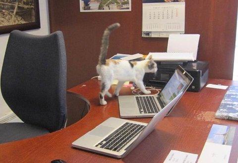 Katten har funnet seg godt til rette på kontoret.