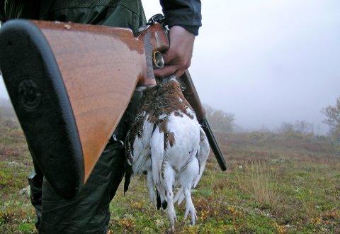 KAMP OM RYPENE: I Statens skoger i Kongsberg er det stor rift om rypa.