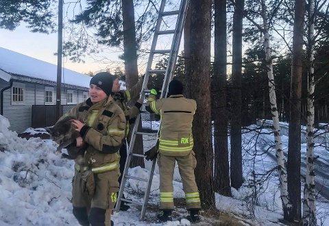 Reddet katt fra tre: Erik Skibrek Lien og resten av vaktlaget fikk katten trygt ned.