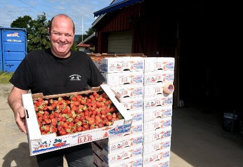 Jordbærbonde Per Kristian Tranberg har tidligere vært vant til å ha norsk ungdom i jordbæråkeren. Denne sommeren ser det ut til at skoleungdommen kommer tilbake. (arkivfoto)