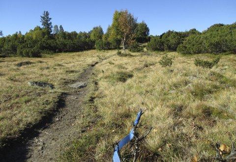 FAMILieVENNELIG: Søndag er det klart for Hydromarsj  i fjellomrpdene rundt Frøystul. Her kan en velge mellom en 6 kilometer eller en 12 kilometer. Løypa er merket med blå bånd.