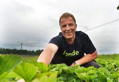 BEKYMRET: Thorleif Müller, leder i Vestfold Bondelag, frykter at årets jordbærsesong må avlyses.