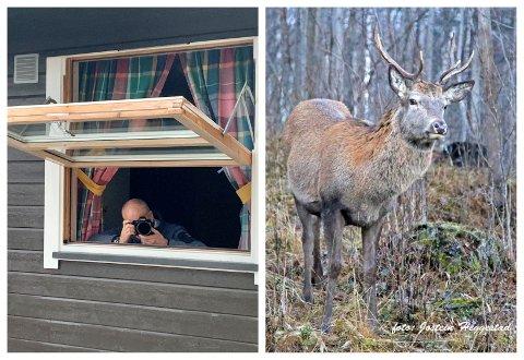 SKAUT BLINK: Jostein Heggestad fanga den flotte hjortebukken i linsa frå soveromsglaset i andre etasje.