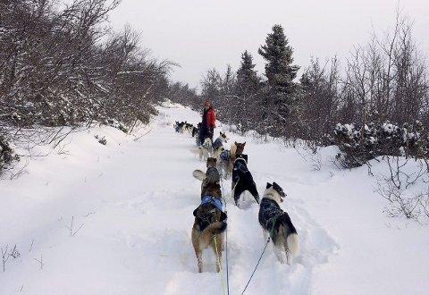 Newton: Marit Beate Kasin får besøk av NRK til uka. De skal lage et innslag i programmet Newton om hundekjøring, og fikk tips om at Kennel Vinterdans i Valdres var stedet å dra.