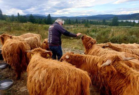 Satser: Bonden fra Øye i Valdres, Nils Torstein Hermundstad, er i gang med et nytt konsept innen lokalmat og dyrevelferd. Dette går ut på at den enkelte nå kan kjøpe sin egen okse. Det skriver selskapet i en pressemelding.