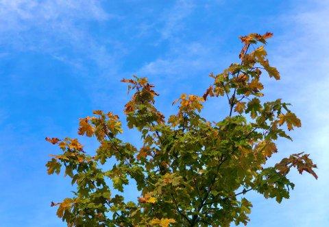 BLÅ HAUSTHIMMEL: Skyene er ikkje så stormannsgalne denne fredagen, og gir plass til det blå.