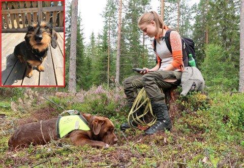PÅ LEIT: Ida Helene Selliseth fra Tobøl mistet dachsen Ura på søndag. Her sjekker hun GPS-en på leit etter hunden sin, mens den lånte sporhunde får hvile.